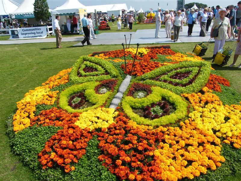 На клумбе бабочка, сделанная из цветов