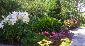 дицентра в садовом ансамбле