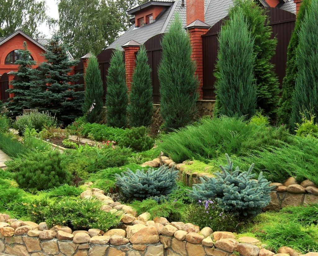 Названия хвойных растений для сада и их фото
