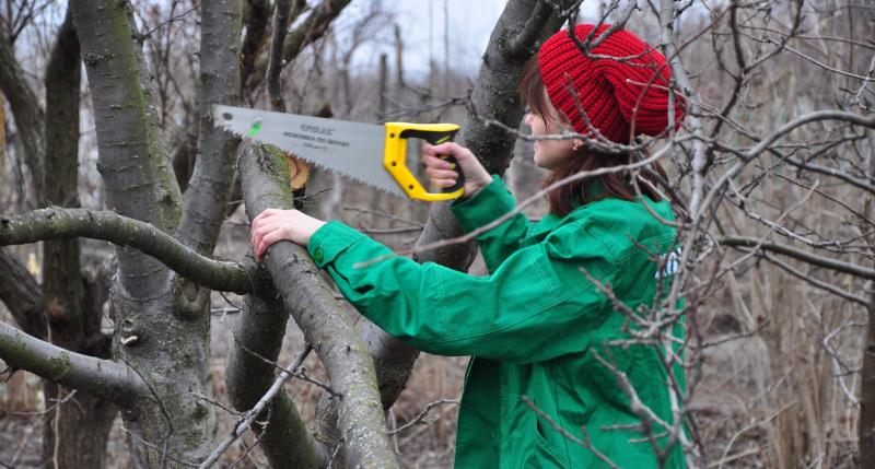 5 ошибок при осенней обрезке, которые могут навредить дереву
