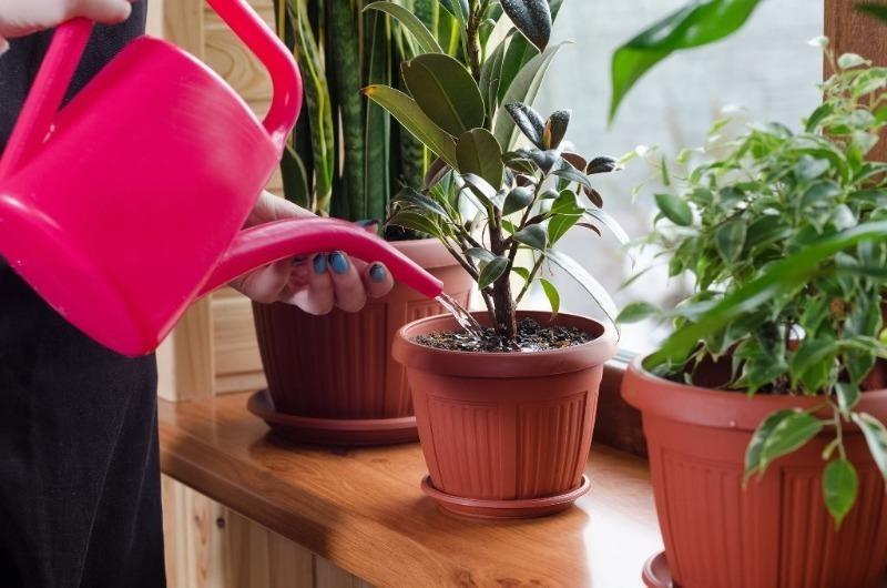 6 дешевых аптечных средств для комнатных растений: даже безнадежный цветок пойдет на поправку
