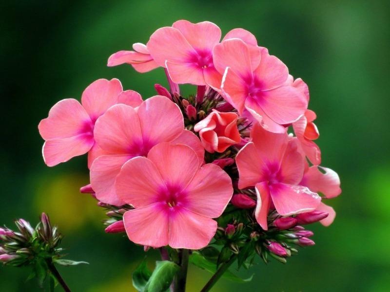 Пора покупать семена: 5 ароматных цветов для сада, которые перебьют все плохие дачные запахи