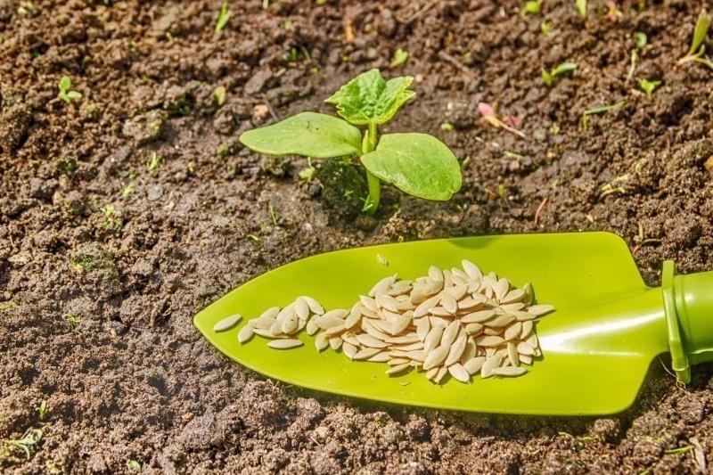 Почему не стоит выбрасывать просроченные семена