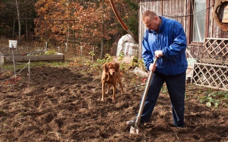 Почему так важно устранить сорняки до зимы с дачного участка