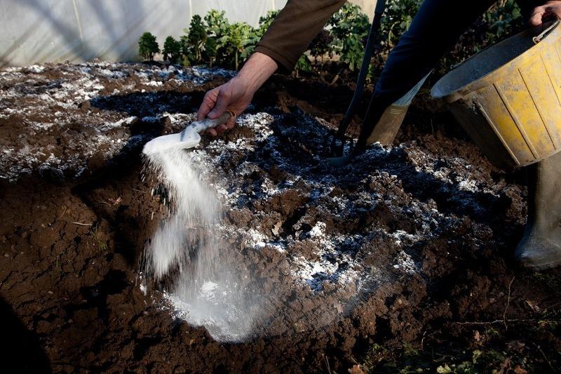 Как обработать почву от грибка, чтобы в следующем году вырастить богатый урожай