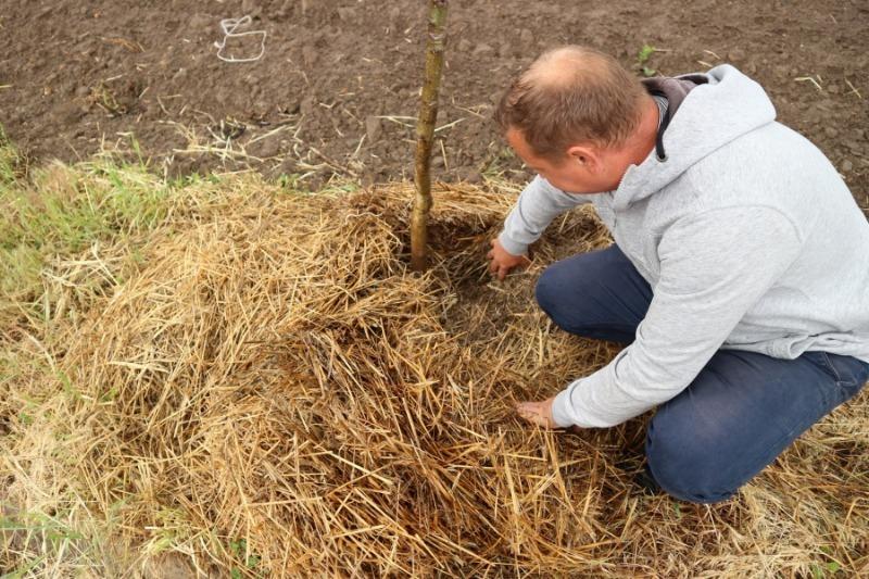 4 распространенных ошибки при мульчировании почвы, которые могут навредить растениям