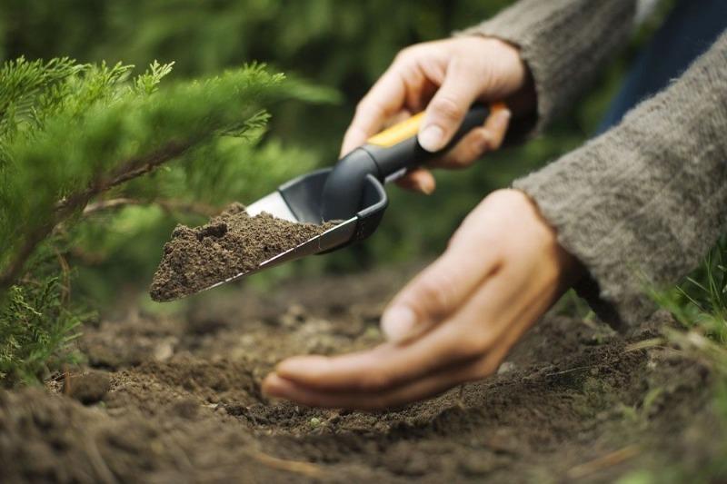 Зачем нужно знать тип почвы на вашем участке и как его определить