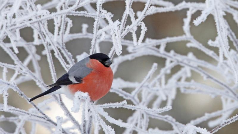 5 погодных примет декабря, которые пророчат хороший урожай