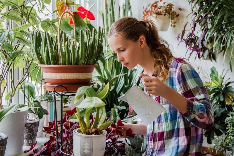 5 веских причин не опрыскивать комнатные растения, вопреки привычкам многих цветоводов