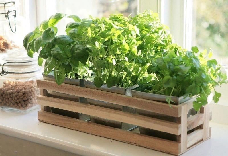 Молодо-зелено: какую зелень можно успеть вырастить к Новому году на подоконнике