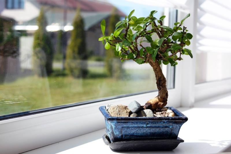 Домашние растения, которые избавляют от недостатков