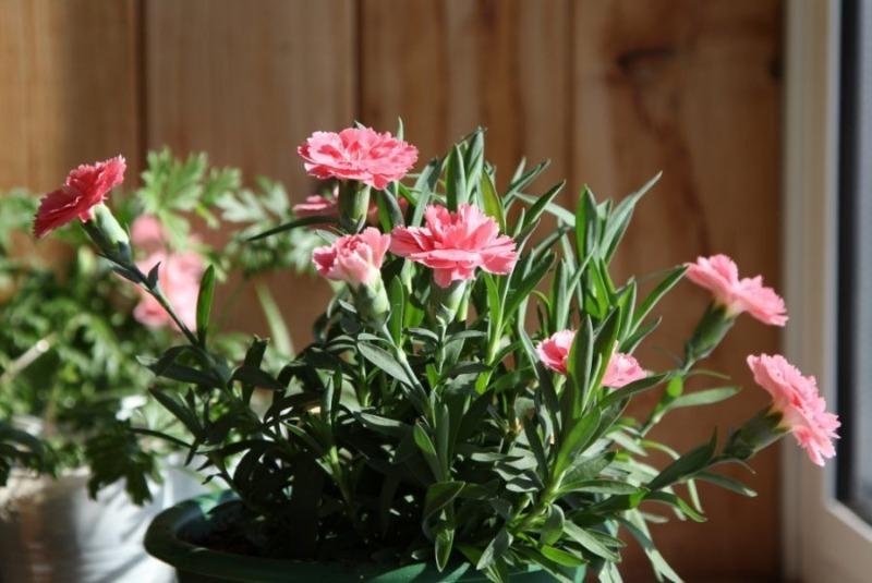 Как узнать характер человека, взглянув на его комнатные растения