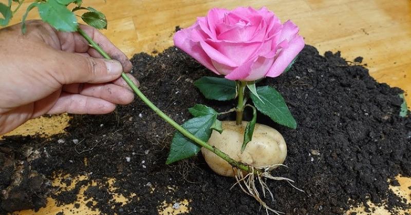 5 популярных, но бесполезных лайфхаков для огорода и сада, которые совсем не работают