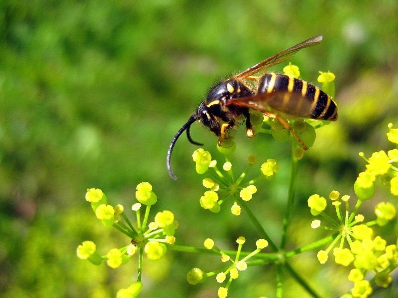 8 распространенных мифов о насекомых, в которые не нужно верить