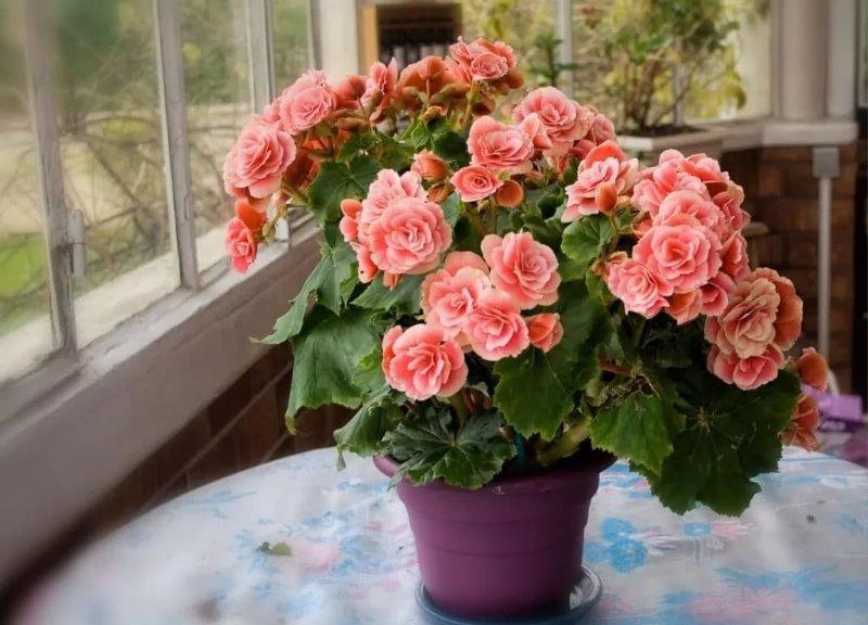 7 домашних растений, которые пахнут лучше новомодных ароматизаторов