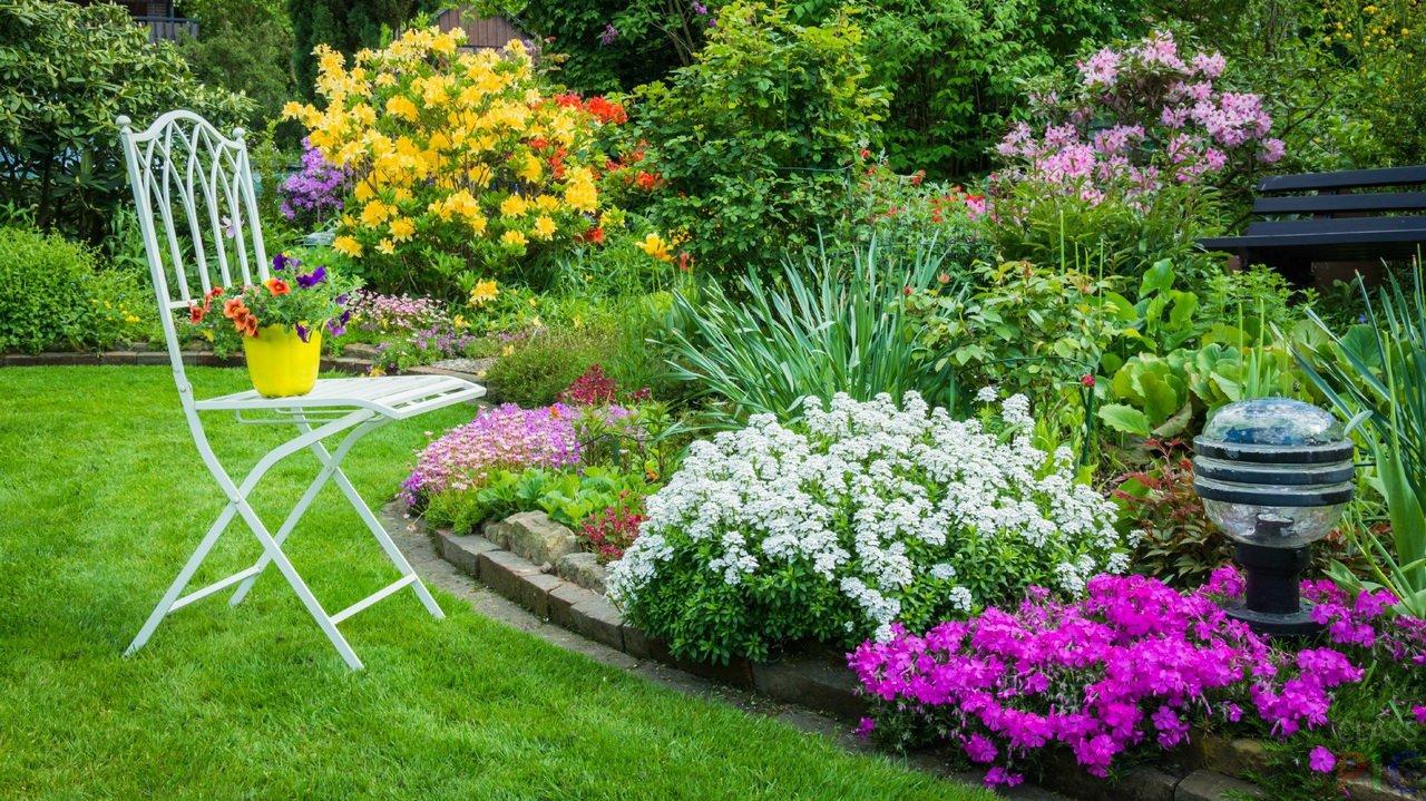 Какие многолетние цветы растут на клумбах: виды, особенности