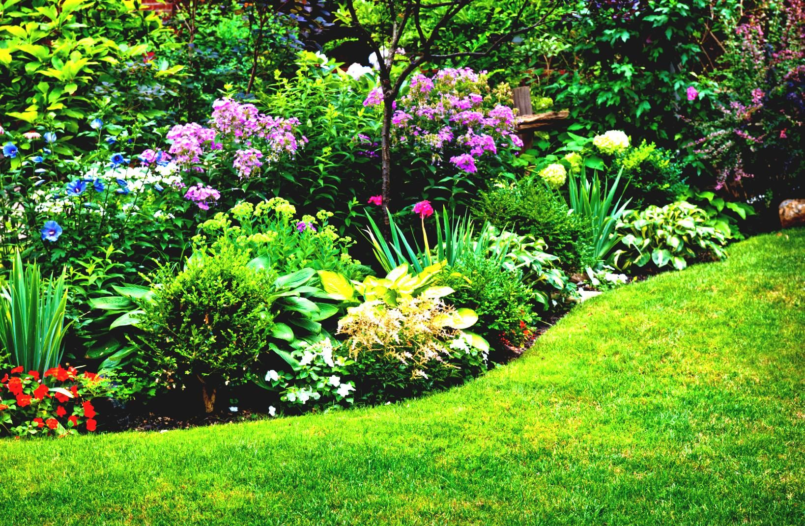 Схема цветка на клумбе фото 396