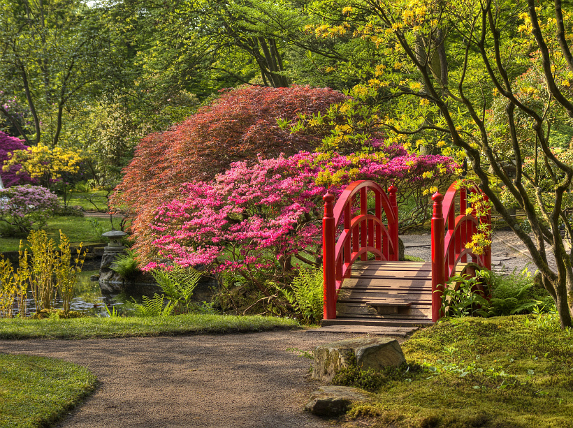 Кусты спиреи около мостика в парке
