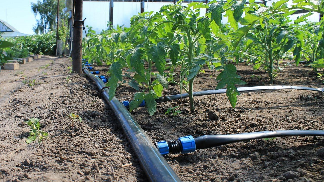 Капельные системы для полива и специальные ленты