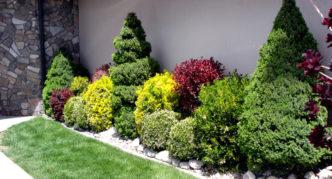 Оформление стены дома из хвойников и кустарников