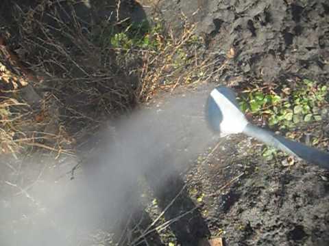 Полив кустарников кипятком весной