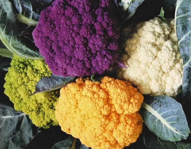 Цветная капуста разных оттенков