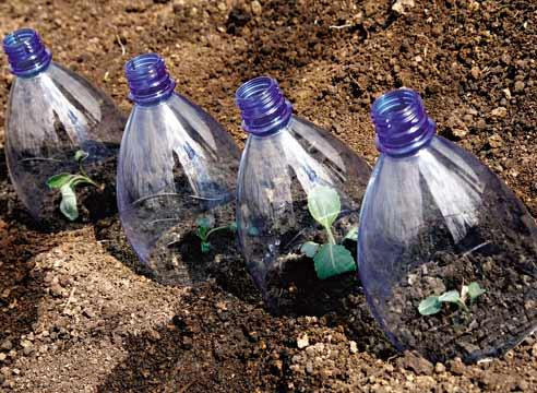 Капуста под бутылками