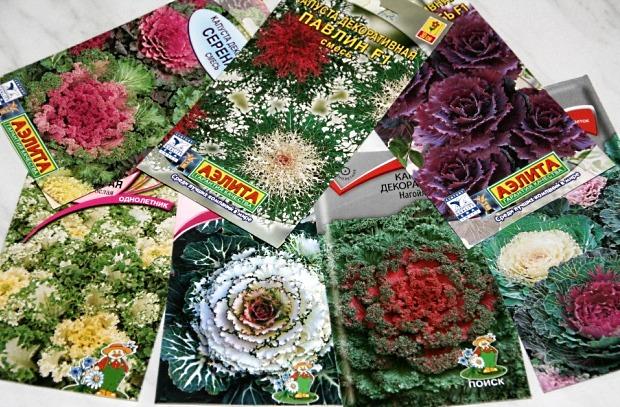 Семена декоративной капусты