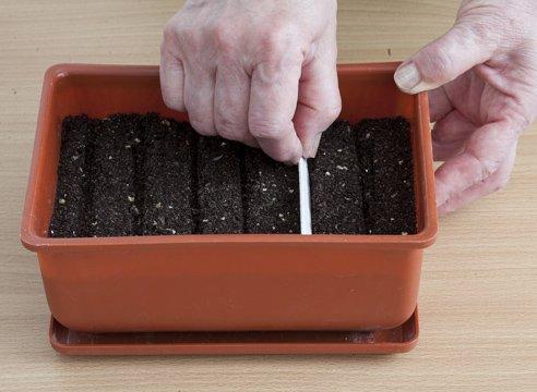 Ёмкость для проращивания семян бархатцев