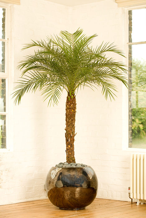 Подходящее место для финиковой пальмы