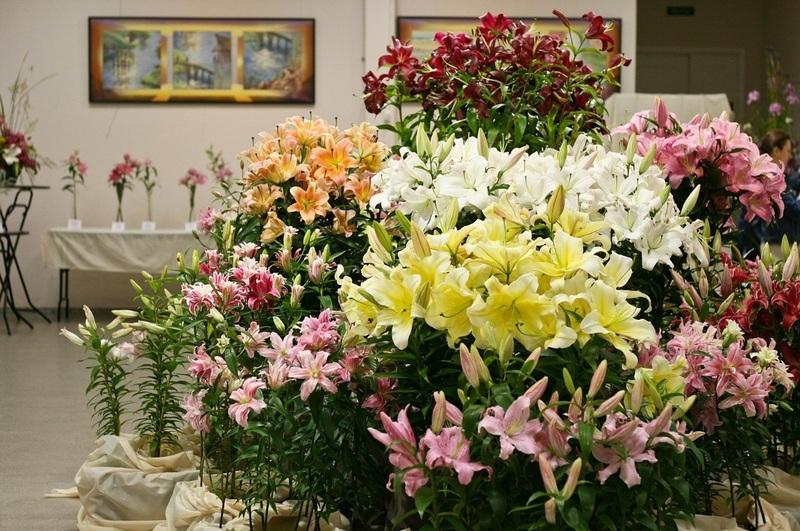 45 лучших сортов лилий с фото: неповторимый вид и аромат для вашего сада