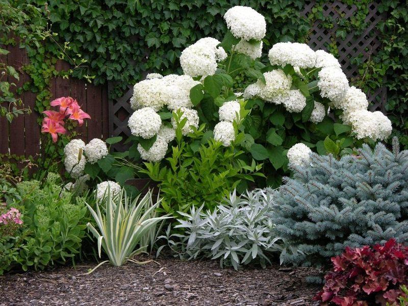 Чем подкормить гортензию для пышного цветения: лучшие удобрения и инструкции к ним