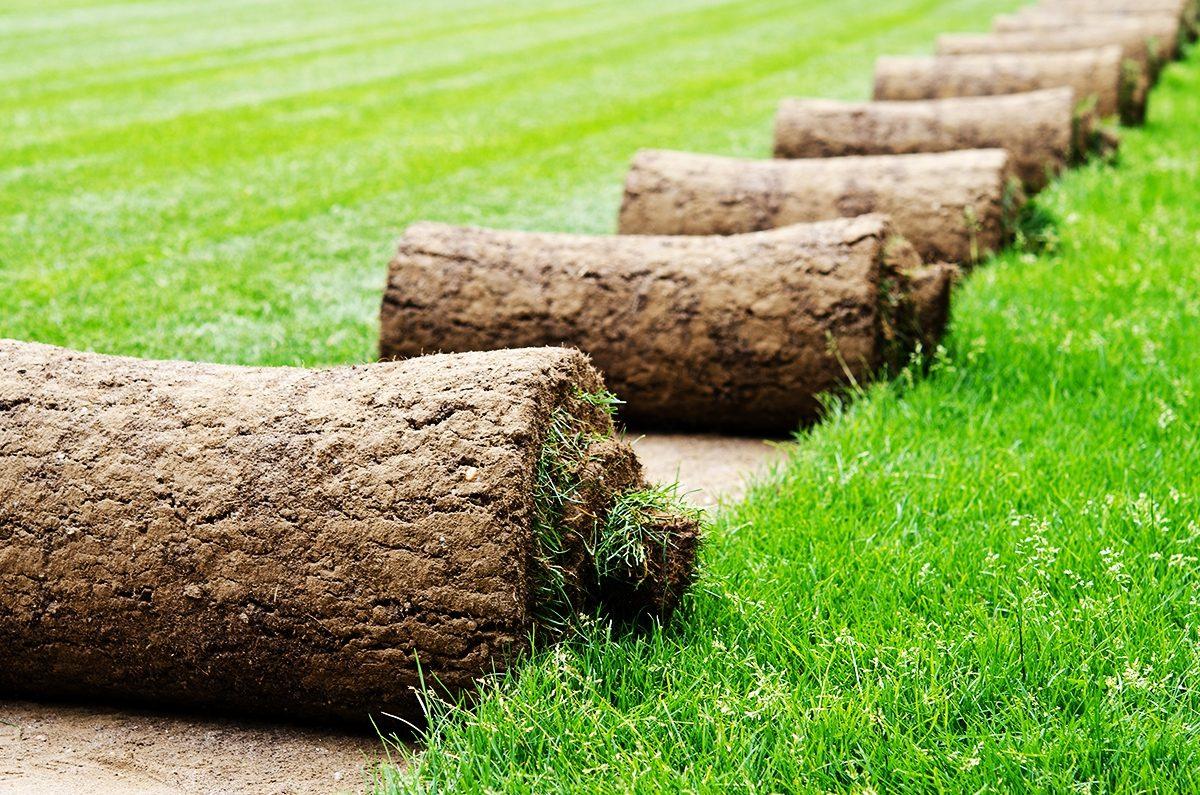 Особенности рулонных газонов